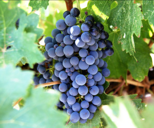 Lehigh Valley Wine Trail