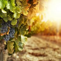 Pennsylvania wine holidays offer a wide variety of wine to try