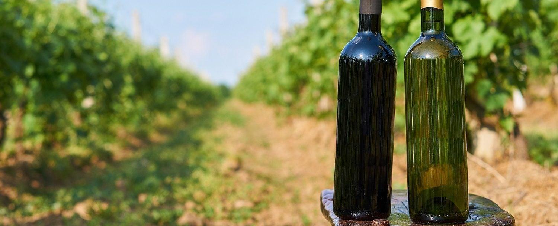 Two bottles of vine in vineyard.