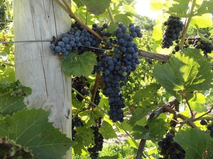 wineries near Bethlehem, PA