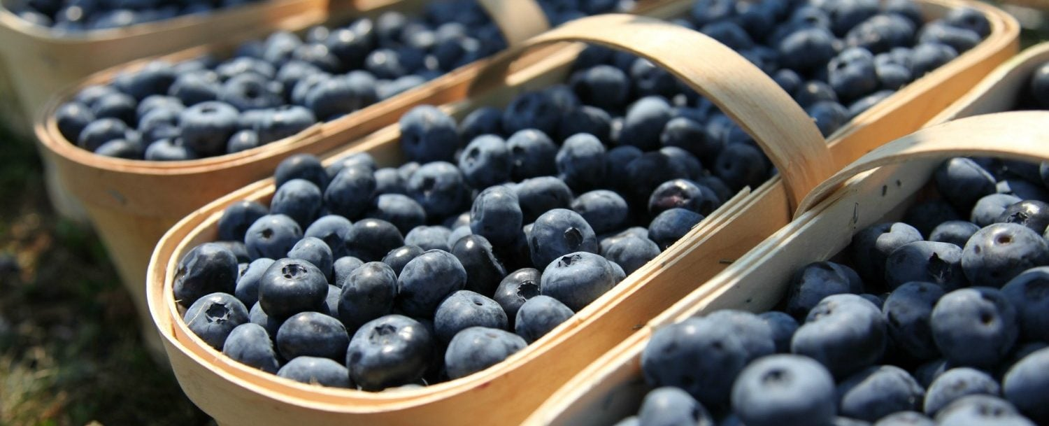 Blueberry Festival at Burnside Plantation