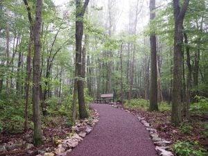 trail on walking path